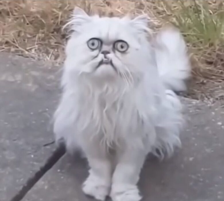 A Crazy Looking Cat At His Mom S House Funny Demotix