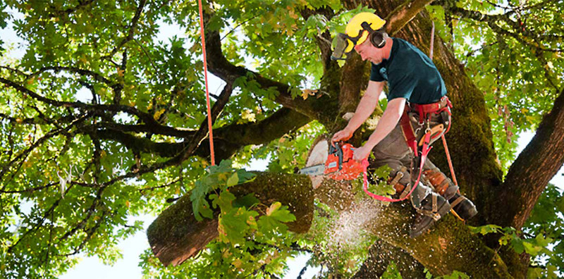 7 Benefits Of Hiring A Professional Tree Service in 2021 - DemotiX
