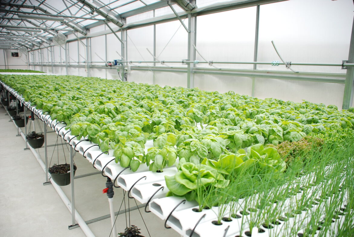 8 Benefits of Hydroponic Growing – 2020 Guide